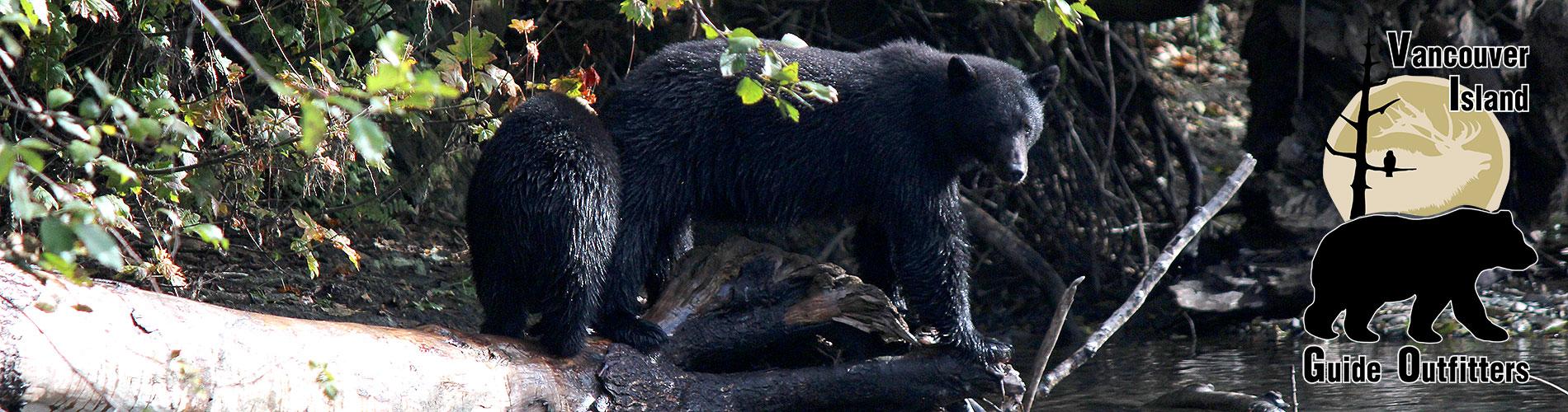 Coastal Black Bear Hunts on Vancouver Island