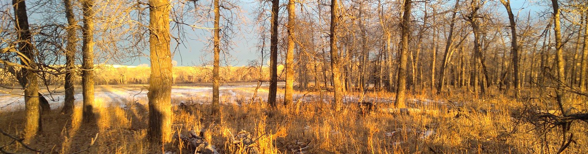 Alberta hunting territory for mule deer