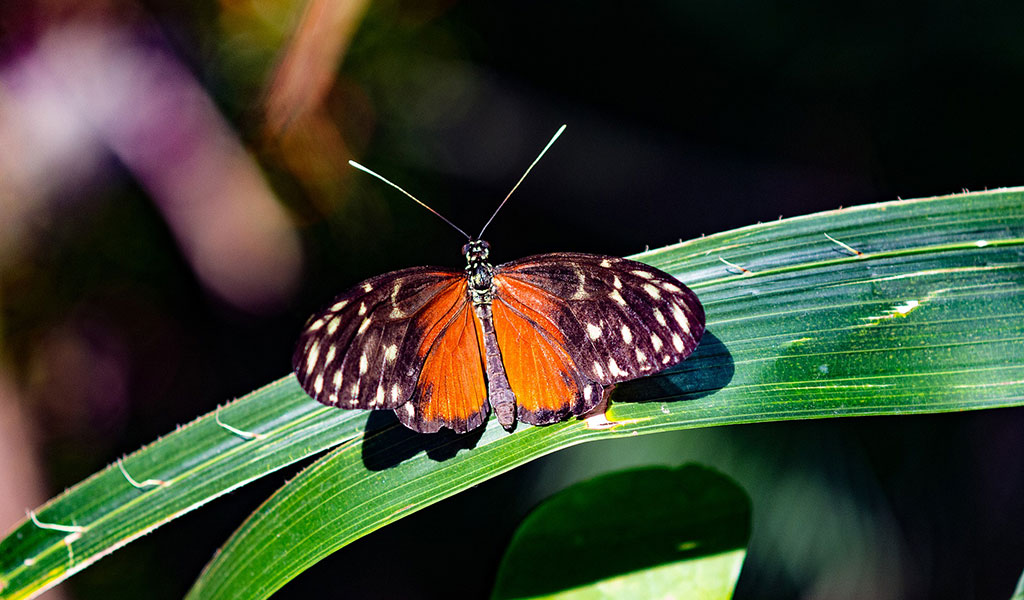 Biodiversity Loss – A Big Concern